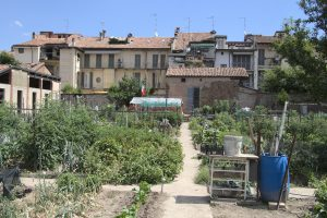 I raccolti degli orti di via Degani