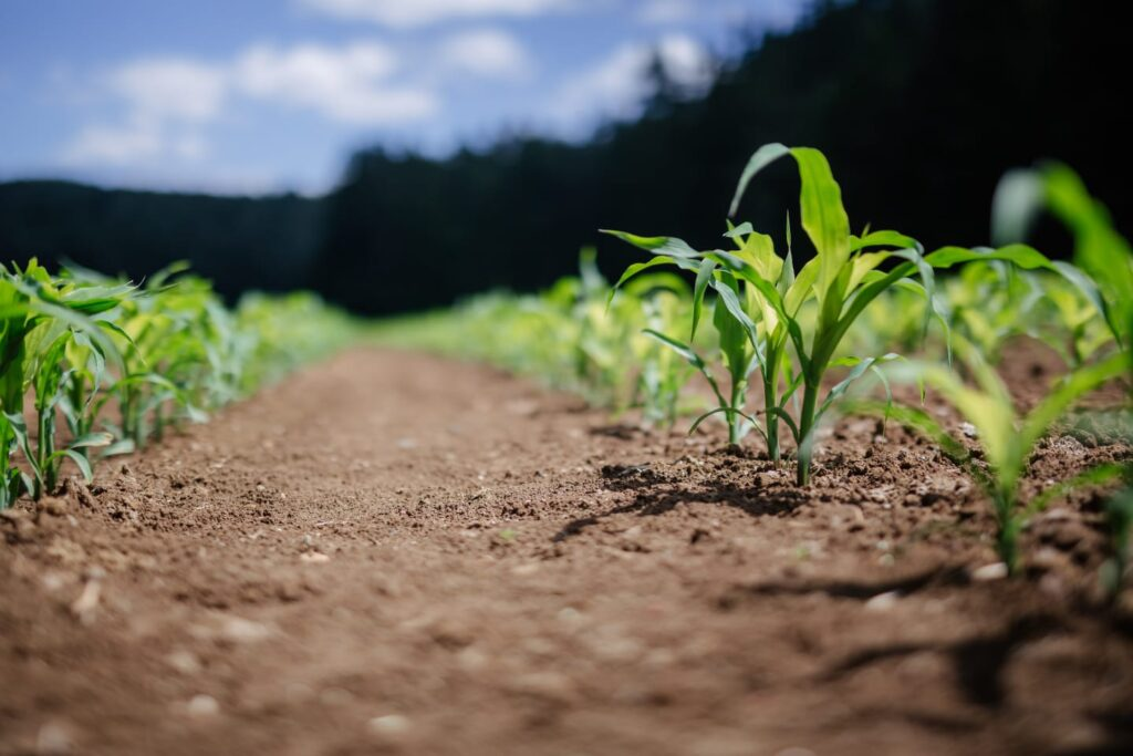 Agroalimentare e futuro